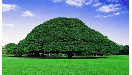Odaa Oromoo