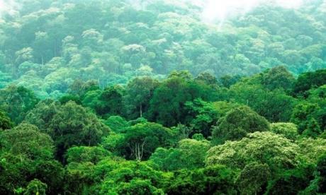 Yaayyuu forest