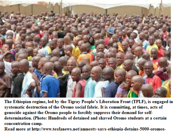 Thousand Oromos detained in 2014 protests