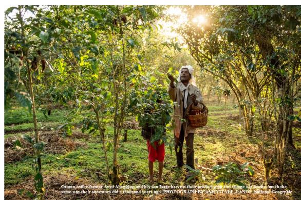 Oromo coffee farmer