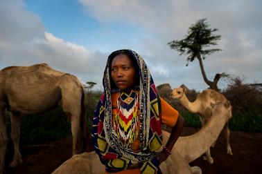 Camel in Borana Oromo