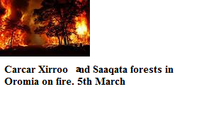 Carcar Xirroo and  Saaqata forests in Eastern Oromia on fire 5th March 2015
