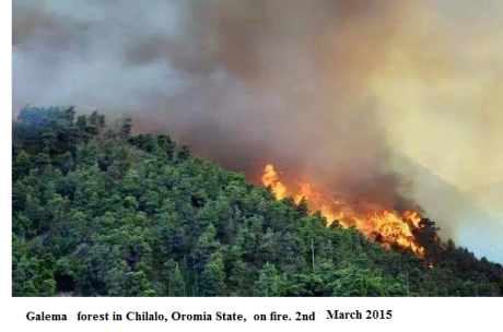 Galema forest in Oromia on fire