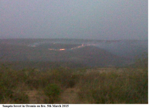 Saaqata forest in Oromia on fire. 5th March 2015