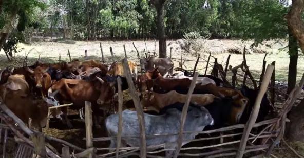 Hacaaluu Hundessa, Oromo culture music video maalan jira picture17