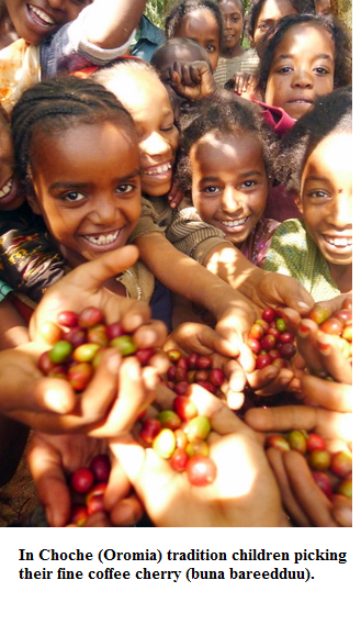 In Choche (Oromia) tradition children picking their fine coffee cherry (buna bareedduu)