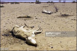 Famine in Ethiopia 2015
