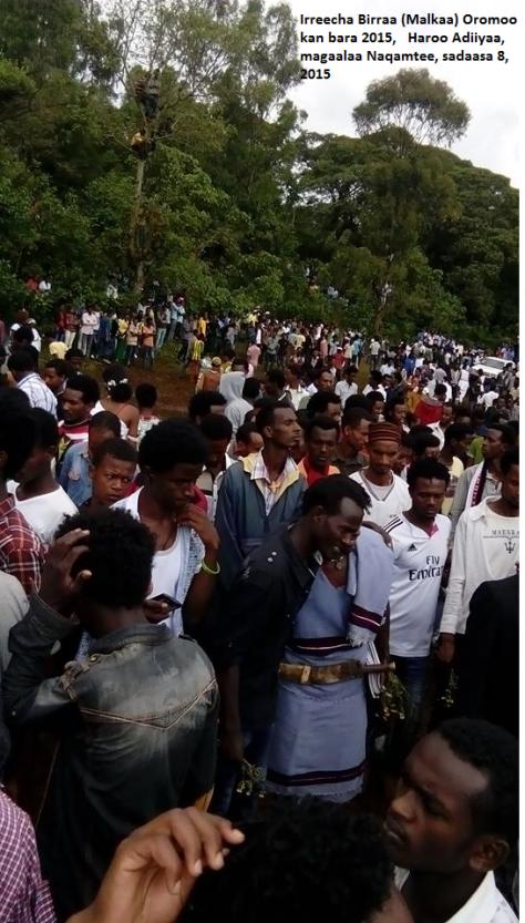 Irreecha Birraa (Malkaa) Oromoo kan bara 2015, Haroo Adiiyaa, magaalaa Naqamtee sadaasa 8, 2015 picture1