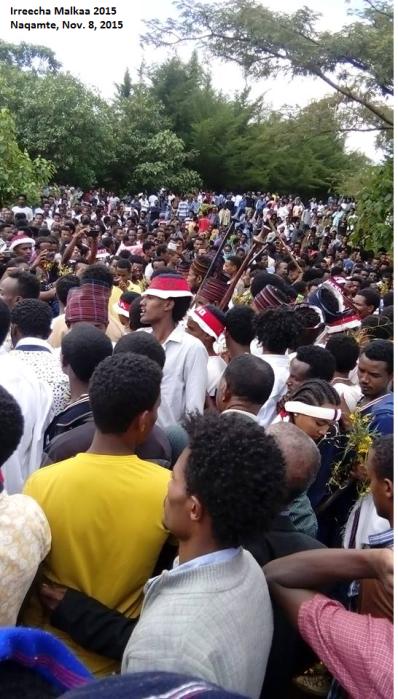 Irreecha Birraa (Malkaa) Oromoo kan bara 2015, Haroo Adiiyaa, magaalaa Naqamtee sadaasa 8, 2015 picture3