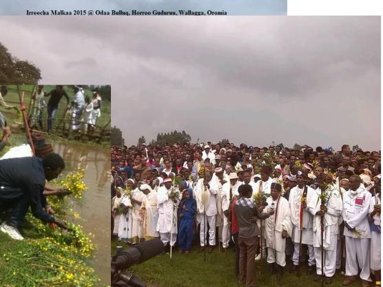Irreecha Malkaa 2015 @Horroo Guduruu, Wallagga, Oromia, picture4