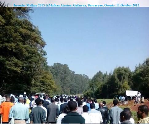 Irreecha Malkaa 2015 @Malkaa Ateetee, Gafarsaa, Buraayyuu, Oromia. 11 October 2015 picture2