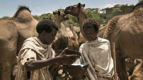 Karrayyuu Oromo and camel milk