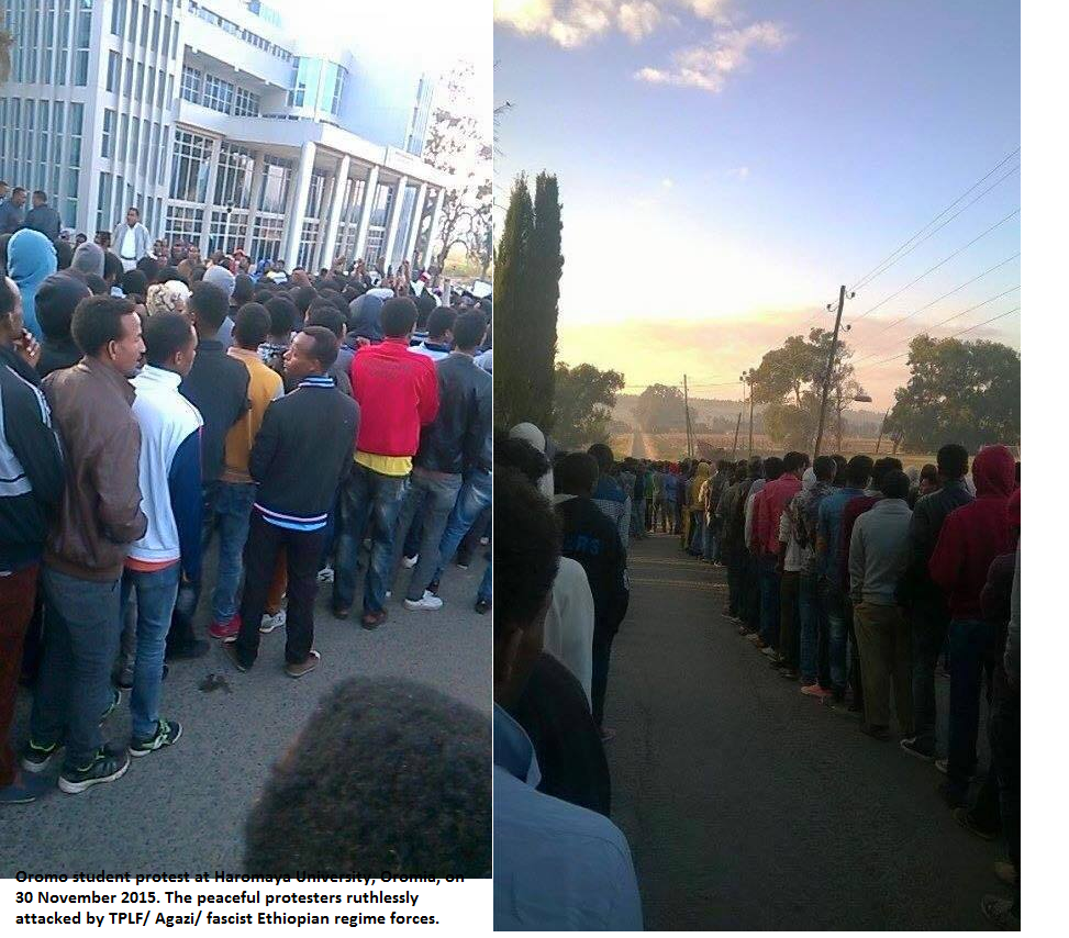 Oromo student protest at Haromaya University, Oromia, on 30 November 2015. The peaceful protesters ruthlessly attacked by TPLF (Agazi) fascist Ethiopian regime forces.