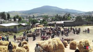 Abbaay Cooman, Horroo Guduruu Wallaggaa, Oromia