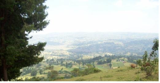 Arjo (Jimmaa Arjoo), Wallagga Bahaa, Oromia, Qarree Arjoo irraan  Dachaa Nageessoo Gara Nuunnuutti